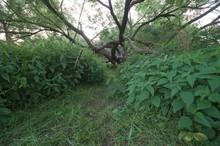 Baumskulptur Im Wiesengrund