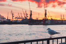 Seagull Sitting On A Railings In Port
