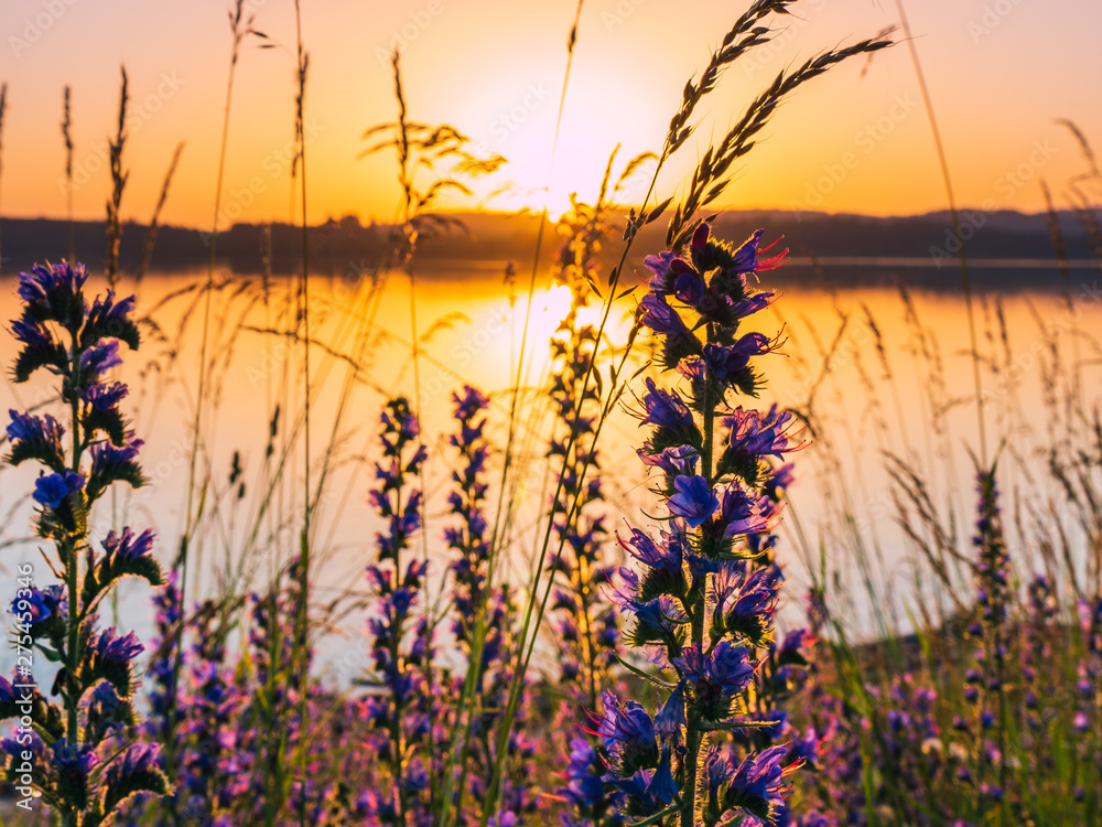 Fototapety, obrazy: Sunset at the lake with plants