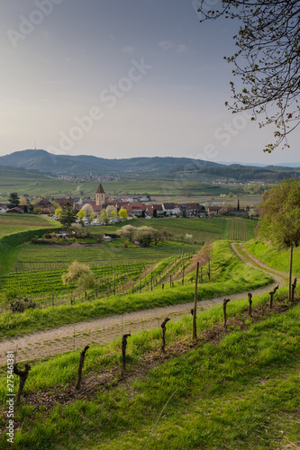 Road to Burkheim am Kaiserstuhl in an early spring morning Wall mural