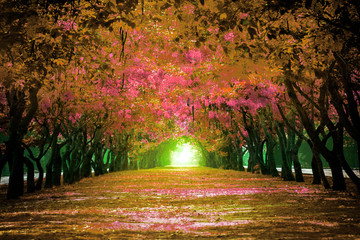 Fototapetafresh and green beautiful of summer blooming yellow flowers tunnel in park , Golden shower,Cassia fistula,perspective land scape use for natural background,backdrop