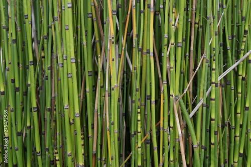 Foto op Plexiglas Groene bamboo forest background