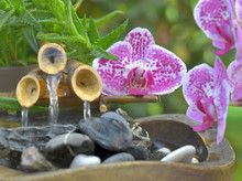 Pink Flowers Of Orchid Put On ...