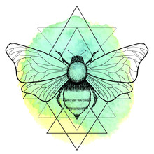 Beautiful Hand Drawn Honey Bee Queen Insect On Geometrical Sign. Vector.