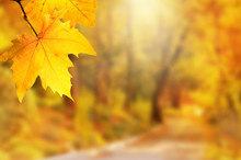 Autumn Background. Yellow Leaf In Autumn Park On A Blurred Background