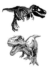 Graphical Illustration, Tyrannosaurus Skeleton And Dinosaur Isolated On White, Sketch