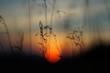 canvas print picture - Blutsonne