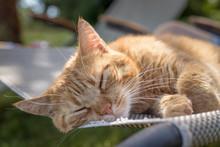 Gelb Getigerte Katze Schläft ...