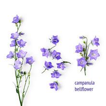 Blue Campanula Flowers, Bellflowers Set