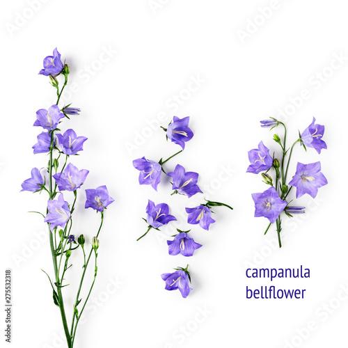 Blue campanula flowers, bellflowers set Canvas Print