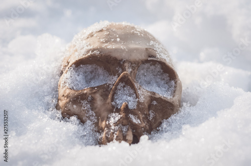 skull covered with snow and ice Canvas Print