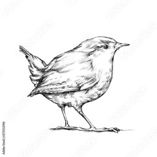 Zaunkönig, winziger Vogel Canvas Print