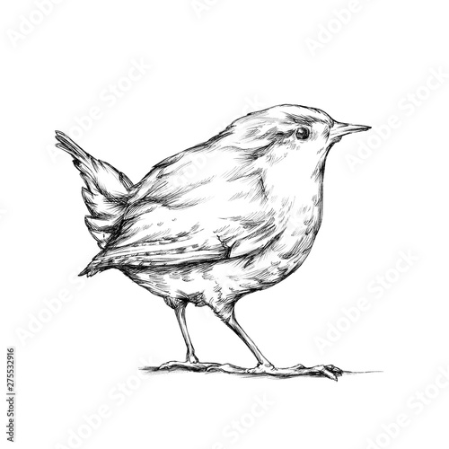 Fotografía  Zaunkönig, winziger Vogel