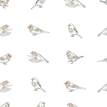 Hand Drawn Sparrows. Vector  Seamless Pattern