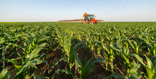 Fotomural  Tractor spraying pesticides at corn fields