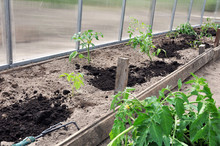 Preparation And Planting In A ...