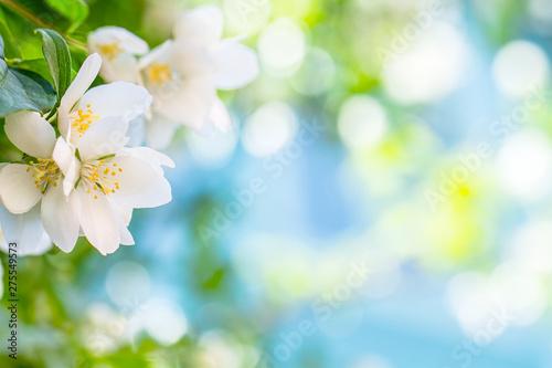 фотография jasmine tree background bokeh