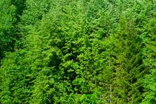 Background - Natural Forest Vegetation Wall