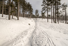 Snow Covered Hiking Trail With Trees Around Bellow Barania Gora Hill In Beskid Slaski Mountains In Poland