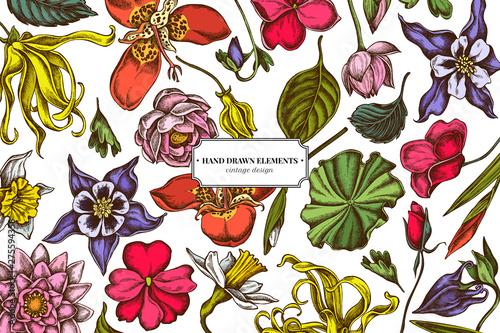 Valokuva Floral design with colored ylang-ylang, impatiens, daffodil, tigridia, lotus, aq