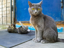 A Cat And Her Kittens Sit On The Threshold Of The Door. The Cat Watches The Kittens Who Are Still Young