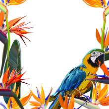 Frame With Strelitzia Reginae Orange Tropical Flower Bouquet And Parrot. Green Leaves, Orange And Violet Blossom. Design Set. Vector Illustration, EPS 10