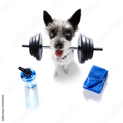 Fotoposter Crazy dog personal trainer dog