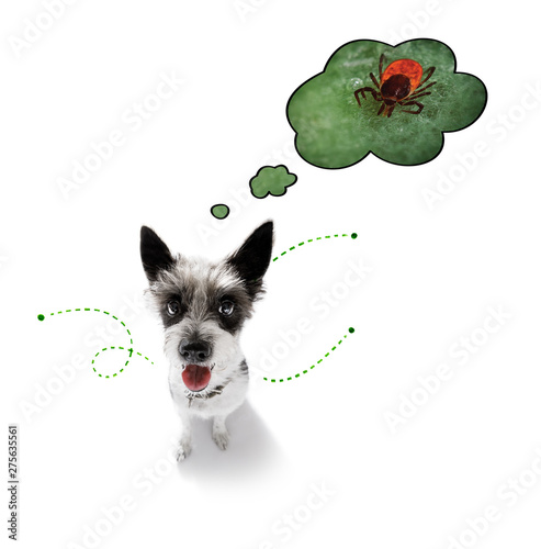 Photo Stands Crazy dog dog with fleas, ticks or insects