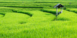 Leinwanddruck Bild - View of green rice field in terrace at Bali with balinese shelter - Indonesia