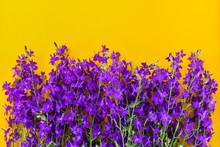 Beautiful Purple Flowers On A Yellow Background. Beautiful Purple Flowers On A Yellow Background