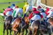 Horse Racing  Jockeys Horses Final Straight Rear Action Photo