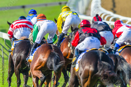 In de dag Paarden Horse Racing Jockeys Horses Final Straight Rear Action Photo