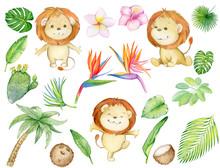 Tropics, Lion Cub, Tropical Pl...