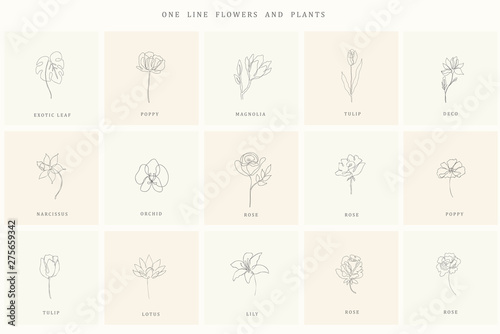 Set of floral design elements for logo.