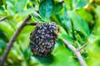 Leinwanddruck Bild - Black honeycomb with a bee body on a green tree.