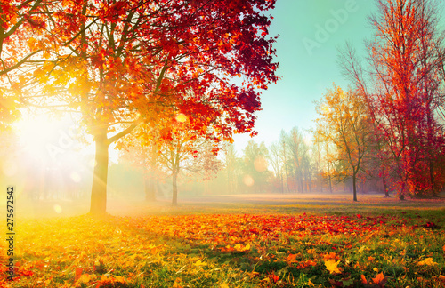 Fotobehang Meloen Autumn Landscape. Fall Scene. Trees and Leaves in Sunlight Rays