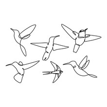 Bird Continuous Line Drawing Set Collections Design On White Background