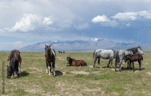 Beautiful Wild Horses In Spring in Utah