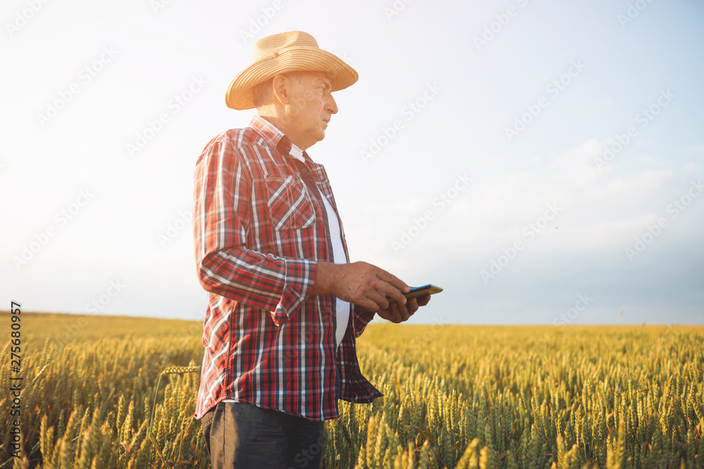 Fototapety, obrazy: Farmers with tablet in a wheat field. Smart farming, using modern technologies in agriculture.