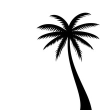 Coconut Palm Tree Vector Silhouette