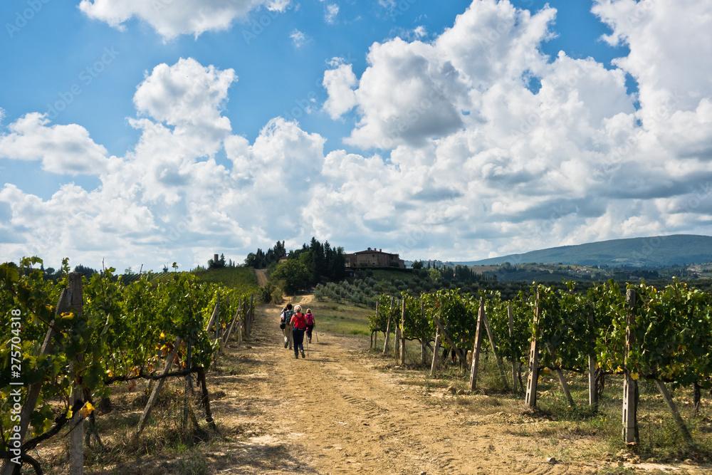 Fototapety, obrazy: Hiking hills, backroads and vineyards at autumn, near San Gimignano in Tuscany, Italy