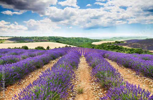 Photo  lavender field. Provence, France.