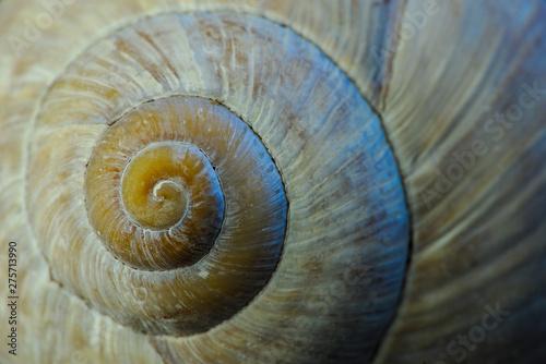 Printed kitchen splashbacks Spiral circonvolutions d'une coquille d'escargot en plan rapproché ; colimaçon