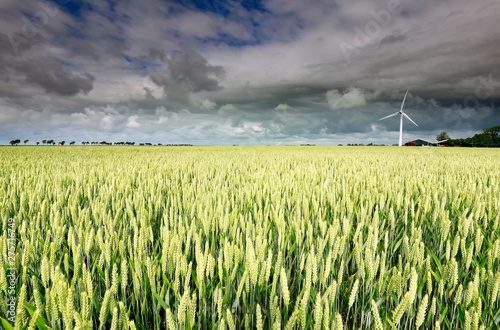 Poster Montagne stormy sky over wheat field with wind turbine
