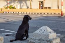 Poor, Unwanted, Homeless Dog I...