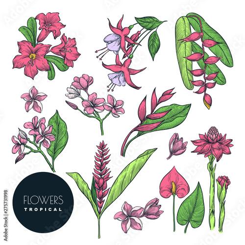 Tropical floral design elements set Canvas Print