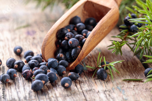 Fototapeta Juniper branch and wooden spoon with berries on a wooden table. obraz