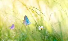 Wild Flowers In The Meadow Wit...