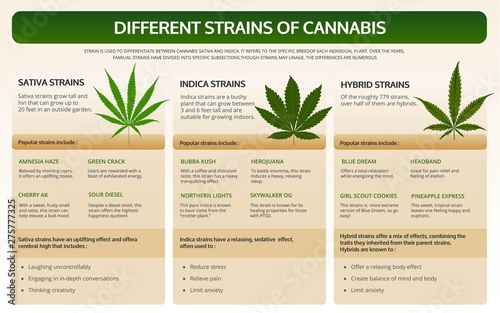 Different strains of cannabis horizontal infographic Canvas Print