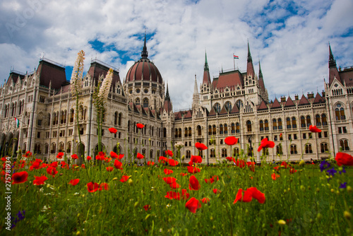 Foto auf Leinwand Budapest Budapest, Hungary: Beautiful flowering red poppies and flowers on green grass near the Parliament building in Budapest